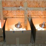 Брудер для цыплят из картонных коробок