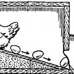 Схематическое изображения ящика с яйцесборником