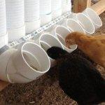 Цыплята питаются у автокормушки