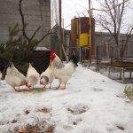 Птицы на прогулке зимой