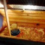 Дом для цыплят,вид изнутри