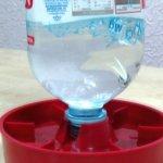Автоматическая поилка из простой бутылки