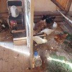 Внутри куриного сарая