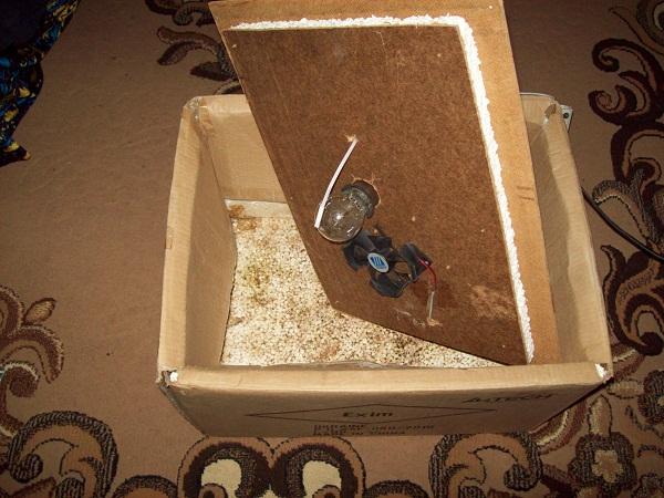 Простой инкубатор из картонной коробки