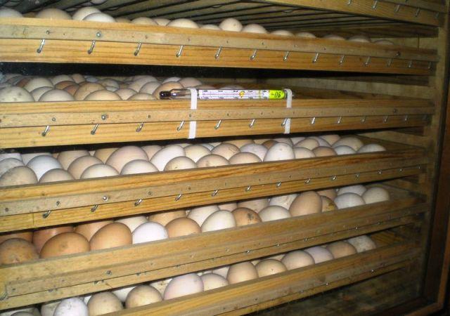 Хранение яиц в лотке