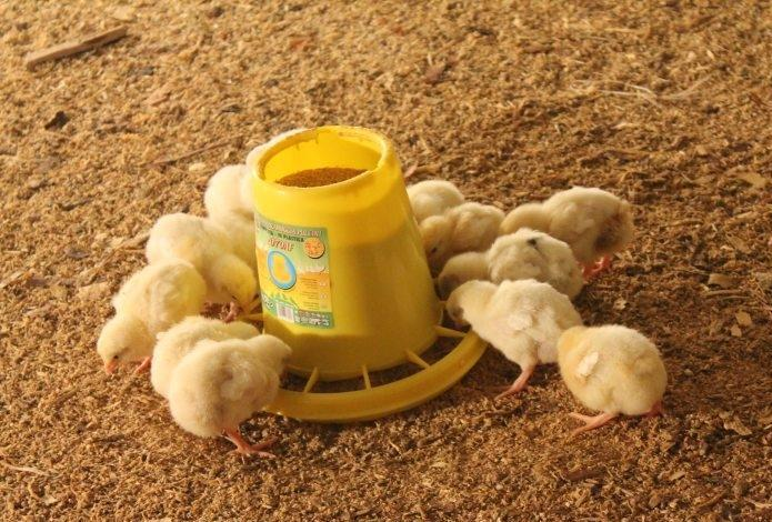 Цыплята собрались возле кормушки