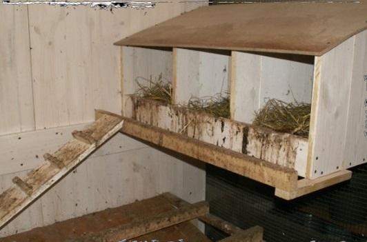 Гнездо курицы с крышей