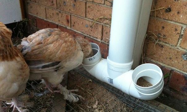Цыпленок ест из автокормушки