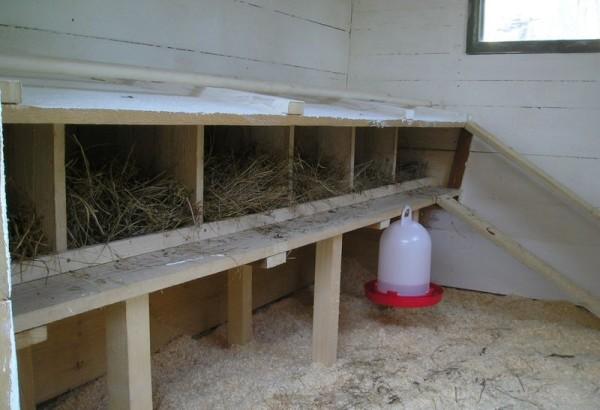 Пример обустройства гнезд для кладки яиц