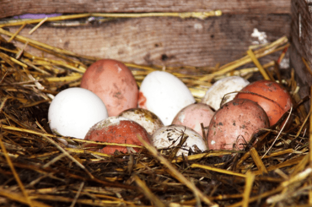Яйца с загрязненной скорлупой