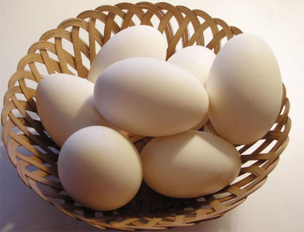 Яйца Австралорп
