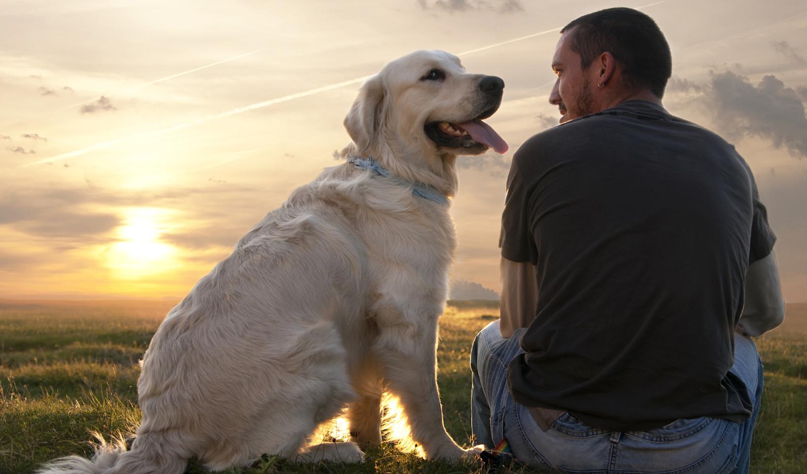 Украсить, собака друг человека в картинках