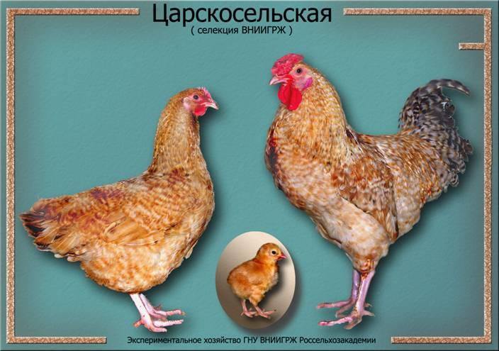 Царскосельские петушок, курочка и цыпленок