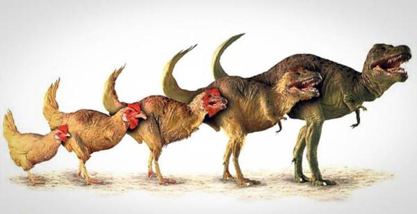 Эволюция от динозавра к курице