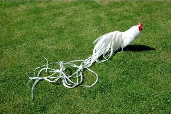 Белый Феникс на траве