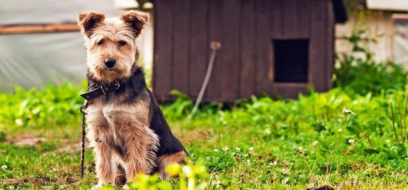 Как приучить щенка и уже взрослую собаку к жизни в будке, цепи в вольеру