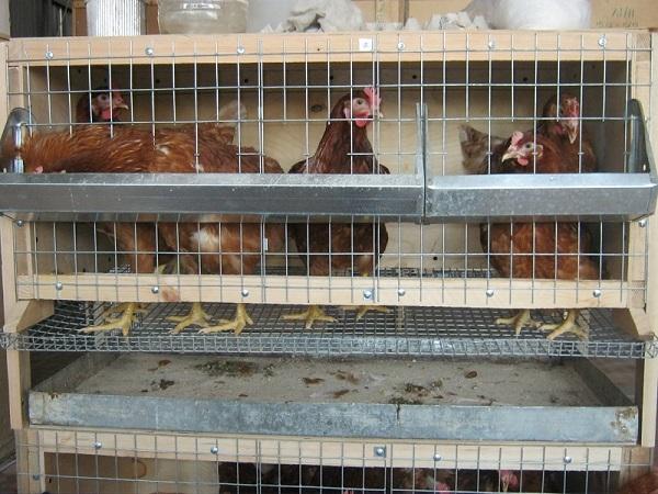 Птицы в самодельной клетке