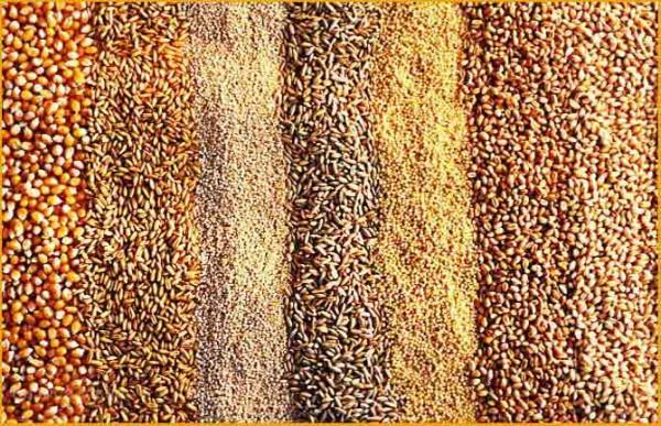Зерно для кормления кур