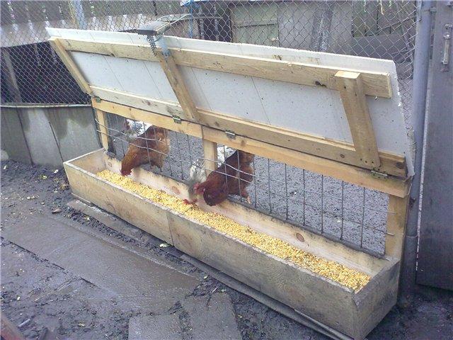 Курочки кушают кукурузу