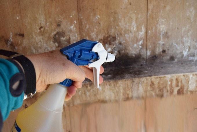 Опрыскивание стен курятника средством от блох