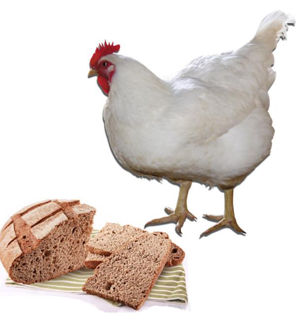 Курица и хлеб