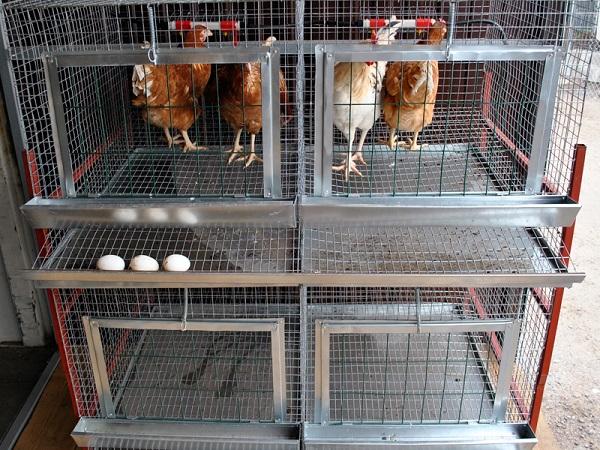 Птицы в клетках с яйцесборником