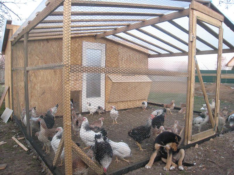 Домашняя вместительная постройка для кур