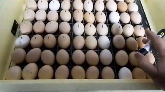 Намеченные маркером яйца