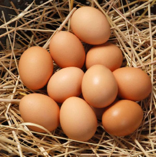 Много нормальных по размеру яиц