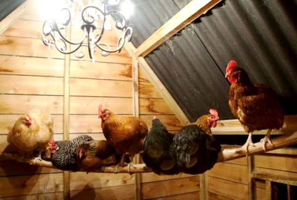 Куры в курятнике под лампой