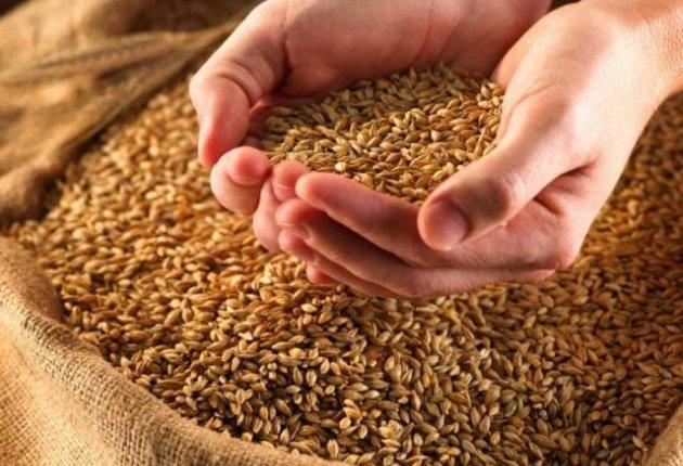 Пшеница для курочек