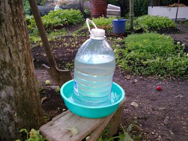 Простая поилка из пластиковой бутылки