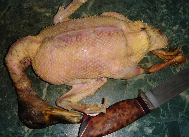 Ощипанная утка с ножом