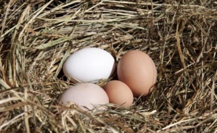 Почему куры несут мелкие яйца и что нужно сделать для увеличения их размера