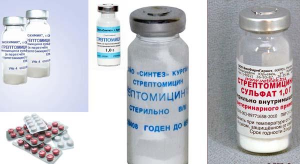 Стрептомицин для борьбы с ларинготрахеитом