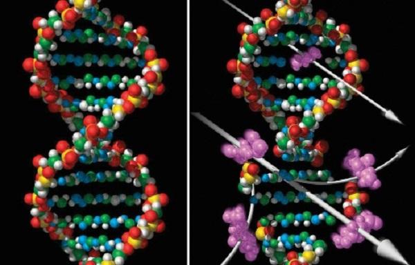 ДНК вируса