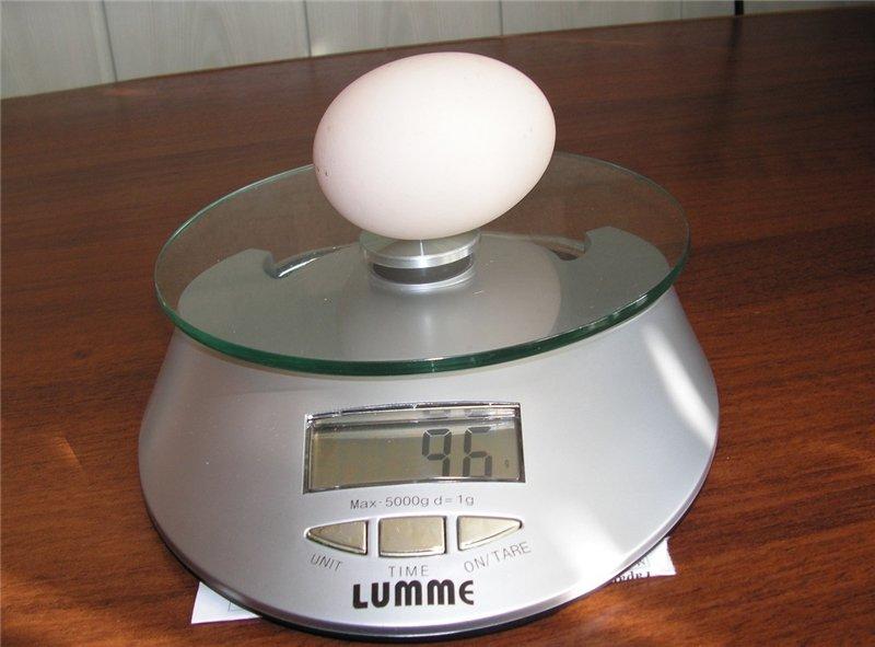 Крупное яйцо Золотисто-серой породы кур